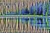 pattern recognition (she, myself and eye) Tags: eechillington nikond90 lakefehr reflections water abstract trees light nature vista lake corelpaintshoppro viewnx2 hiking utah uintahs explored patterns