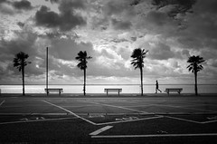 Palm Beach (Scott Baldock) Tags: jogger runner silhouette palm trees street photography ricoh grii pentax monochrome bw black whte people seaside