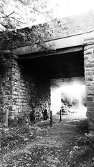 Bridge under Green Lane    (Scarborough - Whitby  old railway) (dave_attrill) Tags: scarborough whitby disused line trackbed route cinder path dr beeching report 1965 ner north eastern railway october 2016