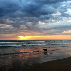 Doggy sunset (enjosmith) Tags: sunset legian beach ocean clouds dog silhouette reflection waves