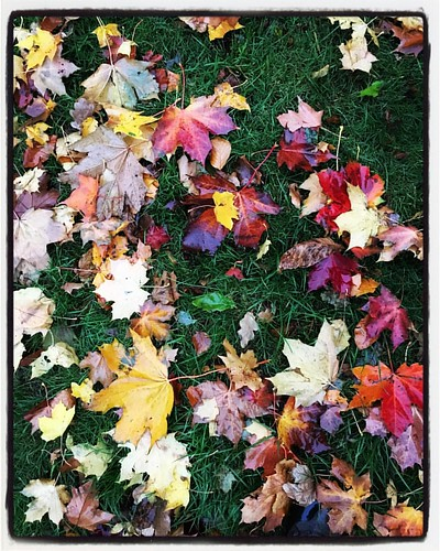 #autumn #lifeinthelittlehousebythetraintrack
