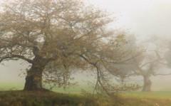 Morning Light (chantsign) Tags: trees morning light mist fog branches park cranford nomahegan impressions soft grass
