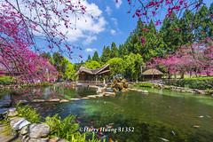 Harry_31352,,,,,,,,,,,,,,,,Formosan Aboriginal Culture Village,Nantou (HarryTaiwan) Tags:                formosanaboriginalculturevillage nantou     harryhuang   taiwan nikon d800 hgf78354ms35hinetnet adobergb