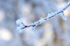 The beauty of frost (Heathermary44) Tags: outdoor depthoffield bokeh pastel frost hoarfrost cold winter denmark treebranch