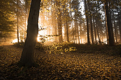 Autumn Light (Tony N.) Tags: belgique belgium wallonie floreffe trees arbres leaves feuilles light autumn automne forêt forest bois tombois sun soleil hiddensun nikkor1635f4 d810 vanguard tonyn tonynunkovics
