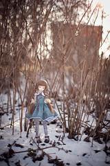 green fox #2 (koroa) Tags: bjd doll msd bluefairy bf tf may winter