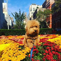 Liesel and Nolan's Kona  is enjoying the fall flowers!