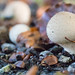 """2016_10_31_Champignons-6 • <a style=""""font-size:0.8em;"""" href=""""http://www.flickr.com/photos/100070713@N08/30694027925/"""" target=""""_blank"""">View on Flickr</a>"""