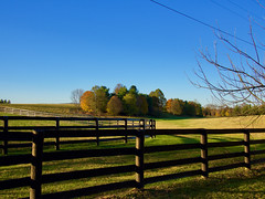 Delong Road Early Nov (alfredo_tomato) Tags: lexingtonky olympusem10 lumix20mm17 farmland landscape