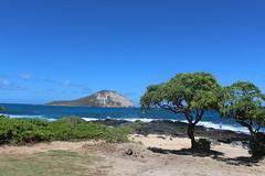 IMG_1257 (michelleingrassia) Tags: makapuubeach beach ocean oahu hi hawaii lavarock rabbitisland