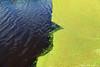 En profile (John.Klaver) Tags: art johnklaver klaver alkmaar fotografie photography nufoto foto fotografia picasa lumiance panoramio photo nikond300 nikond800 photoshop cs5 fotoacademie 1968 panl newton penn avedon cartierbresson photoq facebook magnum digifoto focus diafragma light licht fashion mode portrait portret documentary autonome autonoom landschap landscape sanoma rock holland sports people mensen dike dijk dutch hollands animals architecture architectuur beach california canon wedding color kleur water profile face canal green