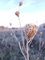 Mr. FROST (alainebarnekow) Tags: ilovenature fantasticnature nature beautifulnature sunrise sunshine frost frosty natural outdoor november freezingcold early thenaturegroup thebeautyofnature