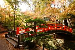 DSC02792 (MrSUIZOU) Tags: 京都 紅葉 北野天満宮 平野神社 十月桜