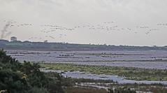 16 11 16 Flooded saltmarsh (Euphorbia2010) Tags: hightides campfieldmarshrspbreserve solwayestuary cumbria