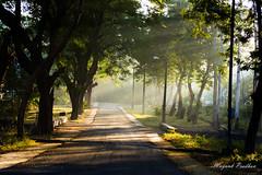 Shades of Light (Mayank Pradhan) Tags: light lightandshadow road morning winters nature greenery nikond5200 nikon
