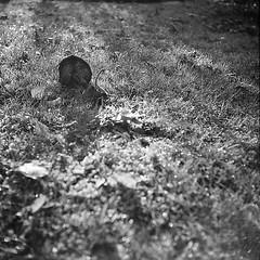 (Christian Güttner) Tags: zeissikonnettar51516 ilford ilforddelta3200 moerschecodeveloper monochrome mediumformat mittelformat 6x6 120 czarnobiale tyskland svartvitt schwarzweis schwarzweisfotografie sw film gras grass gräs natur nature natura ecodeveloper umwelt outdoor pilz rollfilm analog analogue blackandwhite bw bokeh bokhe germany