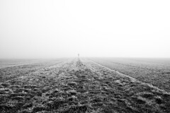 walking into the fog (Johannes Roser) Tags: frost nebel cold kalt fog mist haze blackandwhite walking
