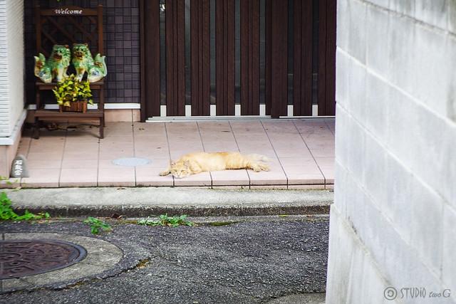 Today's Cat@2015-08-15