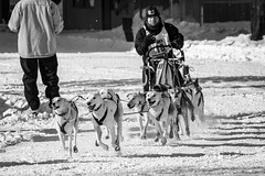 Open North American Championship Sled Dog Race (frostnip907) Tags: winter alaska ak mushing fairbanks sleddogs dogmushing dogracing fairbanksak sleddogracing