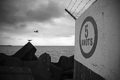 5 Knots (Paul J's) Tags: ocean sea port view parade seawall tasman taranaki breakwater newplymouth