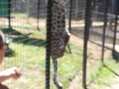 20150919_114016 (mjfmjfmjf) Tags: oregon zoo 2015 greatcatsworldpark