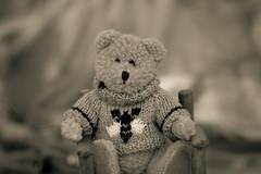 sweater weather - 251/365 (auntneecey) Tags: sweater teddy teddybear day251 htbt day251365 365the2015edition 3652015 happyteddybeartuesday 8sep15