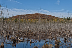 Belot Mountain (cjh44) Tags: autumn mountain tree water hill swamp madawaska