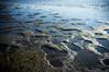 Saaret (timoppi) Tags: nature finland helsinki outdoor balticsea syksy vuosaari kallahti ulkoilu
