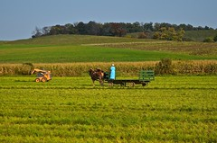 Hauling Hay - Ohio - 2014 (deanrr) Tags: autumn ohio horses woman field grass lady landscape team outdoor farm harvest hills trailer hay farmequipment workhorses 2014 bluedress amishcountry skidsteer caterpillarmustang
