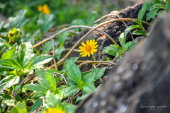 Farm's details (henriiqueprado) Tags: flores flower macro nature natureza nikond3200 expressyourself