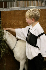 RAWF15 JSteadman 0105 (RoyalPhotographyTeam) Tags: sun cute kid royal goat 2015 rawf nov08