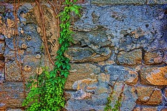 DSC_0450_328_2048p (RVDigitalBoy) Tags: green stone wall vine blocks