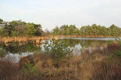 Natuurgebied 'De Malpie' Noord-Brabant (ToJoLa) Tags: winter nature canon natuur wandeling noordbrabant naturetrail 2015 natuurgebied canoneos60d demalpie knooppuntroute