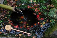 20151219-DSC_4812.jpg (d3_plus) Tags: street autumn autumnfoliage sky fall nature japan nikon scenery shrine kamakura daily autumnleaves  streetphoto 28105mmf3545d  nikkor      dailyphoto touring  thesedays   28105  28105mm   holyplace   zoomlense  ancientcapital     28105mmf3545 d700 281053545 kanagawapref nikond700 aiafzoomnikkor28105mmf3545d  28105mmf3545af aiafnikkor28105mmf3545d