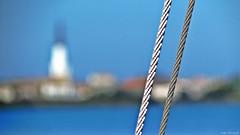 corde de bateau (Pauline) Tags: fleur promenade bateau marais fier leder dars arsenr