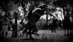 Muita energia, amigos, em 2016 (Eduardo Amorim) Tags: brazil horses horse southamerica brasil criollo caballo cheval caballos cavalos pferde cavalli cavallo cavalo gauchos pferd riograndedosul pampa hest hevonen campanha brsil chevaux gaucho  amricadosul fronteira hst gacho  amriquedusud  gachos  sudamrica suramrica uruguaiana amricadelsur  sdamerika crioulo caballoscriollos criollos jineteada   americadelsud gineteada  crioulos cavalocrioulo americameridionale caballocriollo eduardoamorim cavaloscrioulos