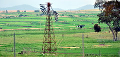 Derelict Intercolonial Boring Company (IBC) New Simplex windmill; Warwick area, Queensland, Australia (sarracenia.flava) Tags: ibc intercolonial boring company new simplex windmill warwick queensland australia intercolonialboringcompany