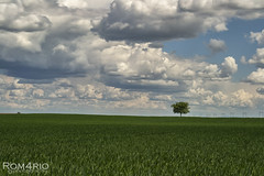 Lost (Rom4rio Photography) Tags: nikon nikkor nikond3100 natura nature nuvole nori clouds cielo cer sky outdoor allaperto naerliber pianta plant planta copac albero tree color campo cmp field landscape paesaggio peisaj verde green blu blue albastru d3100 amatore amateur amator