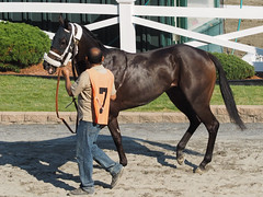Puccinni (avatarsound) Tags: boston suffolkdowns horse horseracing jockey race racetrack racing