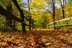Foliage (lancevalour) Tags: ifttt 500px fall delaware water gap national park foliage autumn pennsylvania leaves