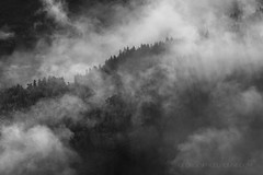 Forest Mist (Old-Man-George) Tags: 2016 geiranger georgewheelhouse landscape norge norway scandinavia travel trees wwwgeorgewheelhousecom mist fog pine forest woods cloud blackwhite d884410