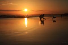 Entardecer em Vilamoura (Zéza Lemos) Tags: sunset sol praia portugal puestadelsol pordesol algarve água aves areia mar vilamoura arlivre oceano natureza natur núvens reflexos reflections férias