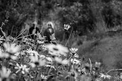 A stroll in the bush (Richard Mart1n) Tags: monochrome black white blackandwhite abstract art travel hiking bushwalking bush australia westernaustralia awesome d5000 nikon