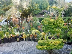 Succulent Pots (mikecogh) Tags: apia samoa succulents pots collection