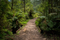 Where the path takes us (shyamgn) Tags: forest green trees ferns mountworthstatepark westgippsland seaview sigma1750 canon70d tree trail garden victoria