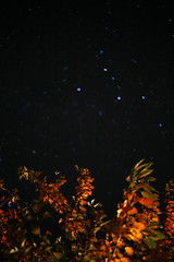 You Were Nothing Special 'til You Turned Out the Light (12) (Mrs.Black&White) Tags: night stars nightgarden garden dark leaves trees cosmic canon5d