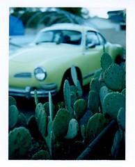 ghia and cactus (EllenJo) Tags: volkswagen vw karmannghia yellow car cactus pricklypear clarkdale arizona az 1973volkswagen polaroidpathfinder polaroidlandcamera convertedpathfinder landcamera polaroid fujifp100c fujiinstantfilm fujifilm 2016 roidweek polaroidweek ellenjoroberts ellenjo instantfilm driveway home automobile vintage f56 130 dusk