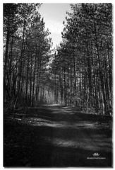 NOVEMBER 2016  NM1_1897_016628-22 (Nick and Karen Munroe) Tags: blackandwhite beauty trees forests woods nikond750 nikon nickmunroe nickandkarenmunroe nickandkaren karenick23 karenick karenandnickmunroe karenmunroe karenandnick munroedesignsphotography munroedesigns munroephotography munroe ontario canada blackwhite bw bandw monochrome desaturation desaturated fall autumn haltonhills harbor hiltonfalls hiltonfallsconservationarea milton nikon1424f28