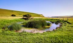 The Pond (Francesco Impellizzeri) Tags: brighton landscape england