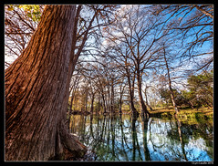 Cypress Blue